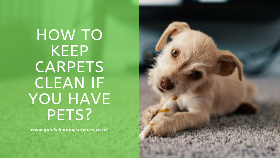 How to keep the carpets clean with pets