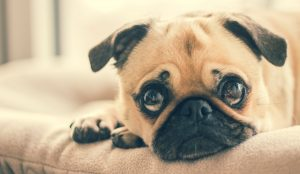 Tips to keep the carpets clean from pets