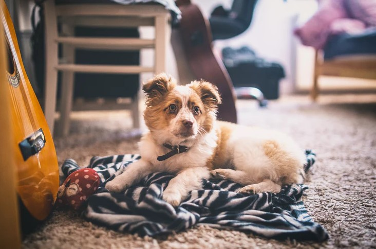 carpet cleaning tools to remove pet stains