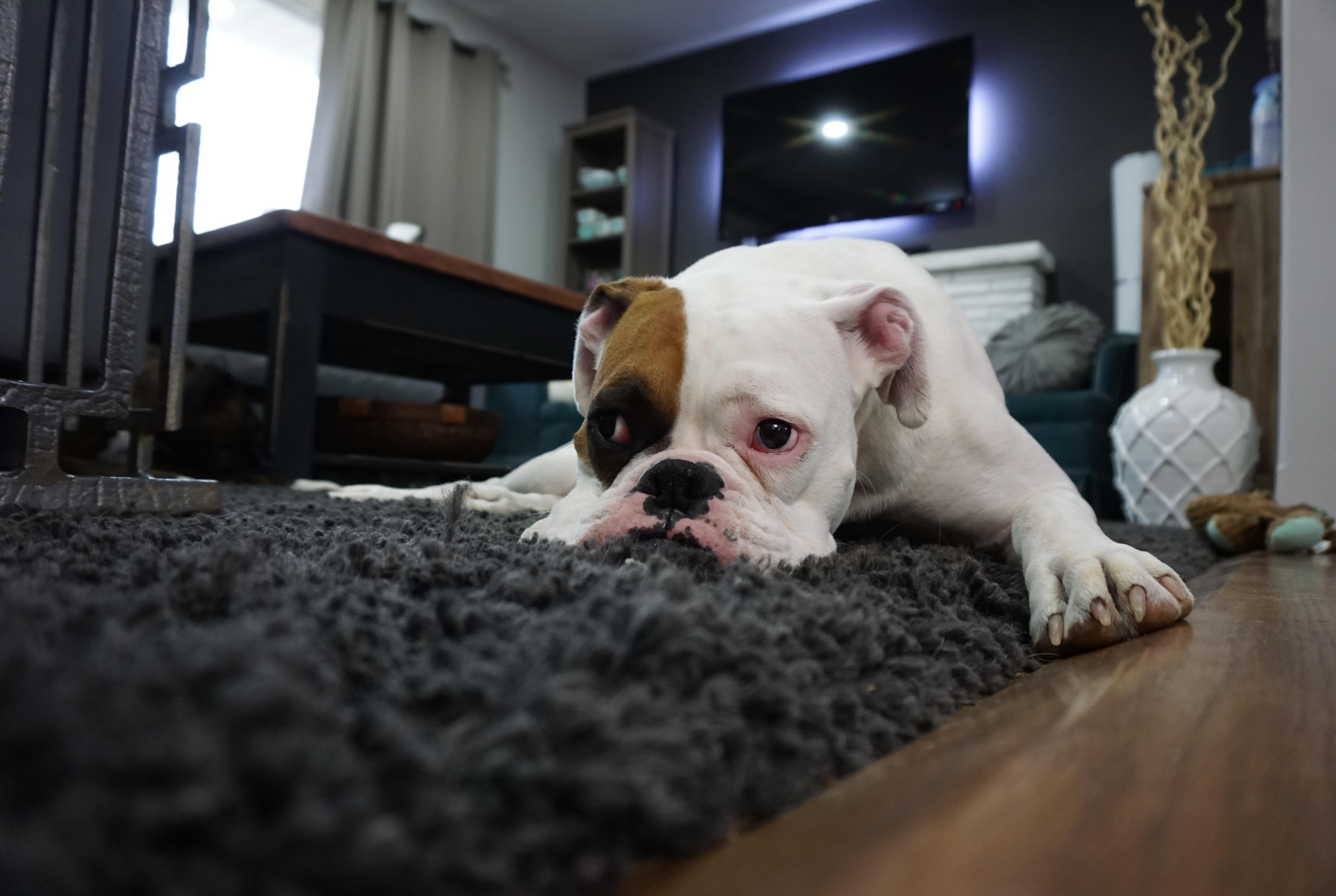 _Carpet Cleaning Services in Enfield